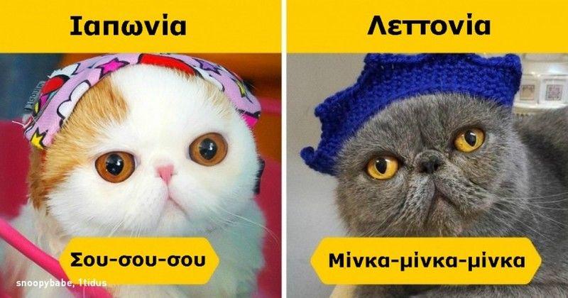 Πως φωνάζουν τις Γάτες σε 12 Χώρες του κόσμου