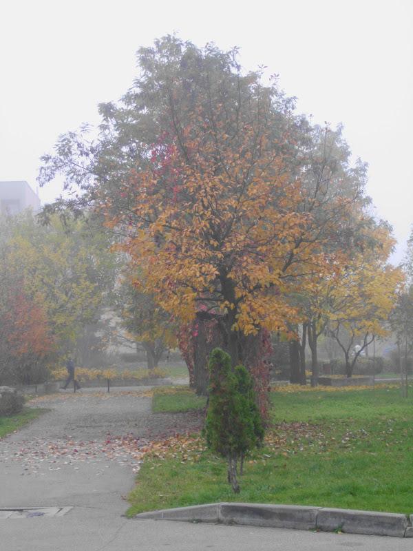 Kociafrania Rano Mgła W Pole Szła