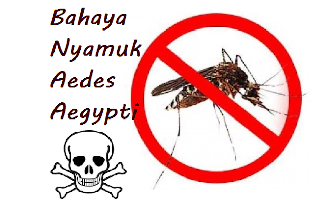 Beberapa Cara Mengelakkan Nyamuk Aedes Aegypti