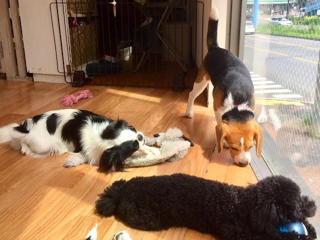 Dog Heart cafe in Harajuku, Tokyo, Japan