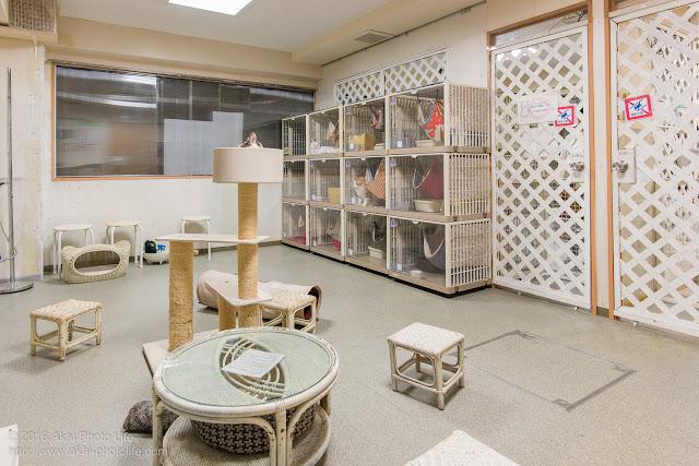 猫カフェ西国分寺シェルター、店内の部屋3つのうち一番大きい部屋を写した写真