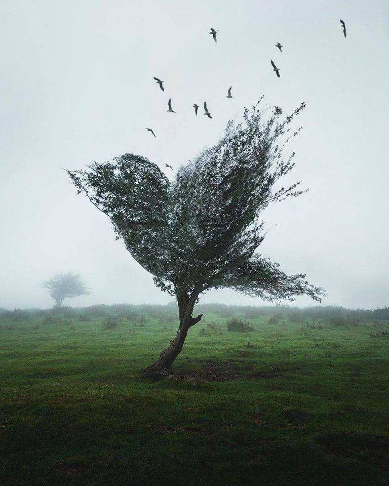 ảnh nghệ thuật siêu tưởng