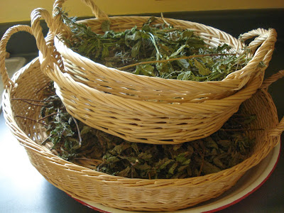 How to package dried herbs