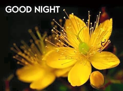 Yellow Flowers Images For Good Night