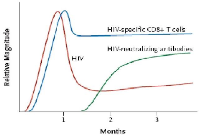 Réponse immune spécifique contre le VIH - Virologie Immunologie