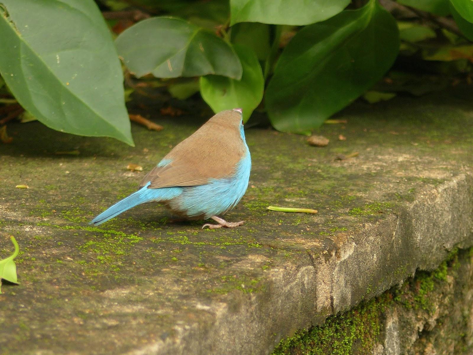 Birding For Pleasure Through My Lens