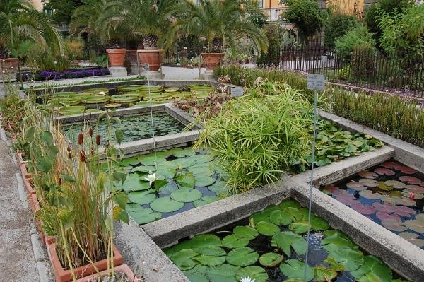 orto botanico-Padova-piante-scienza