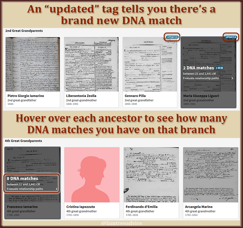 "The ""updated"" tag on your ancestor is a quick way to find your newest DNA matches with a known connection."