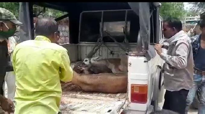 श्वानो ने किया हिरणों पर हमला, एक की मौत,आधा दर्ज़न घायल