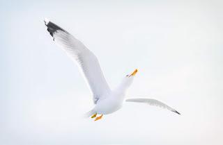 Burung yang berpindah-pindah