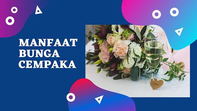 7 Manfaat Bunga Cempaka (No. 5 Wanita Harus Tahu)