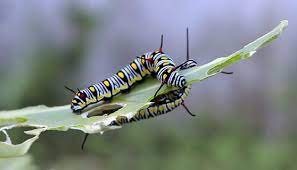 How to Successfully Cultivate Caterpillars For Beginners