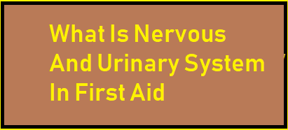 What Is Nervous And Urinary System In First Aid