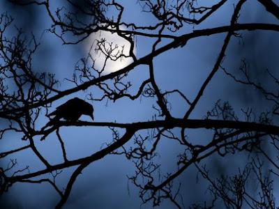 місяць і птах