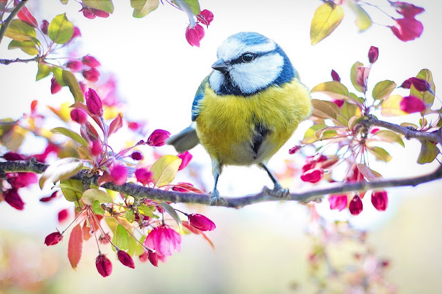 خلفيات عصافير ملونة
