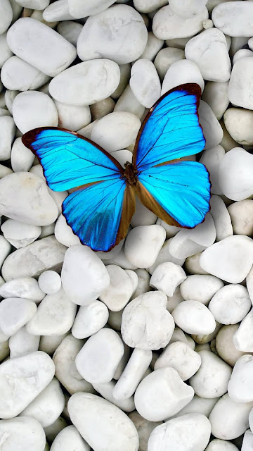 IPhone Blue-Butterfly Wallpaper