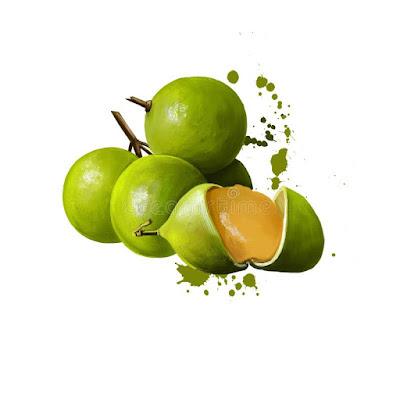 apakah buah spanish lime atau jeruk spanyol ada di Indonesia