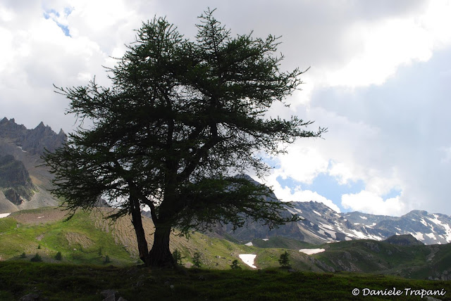 Silhouette d'albero