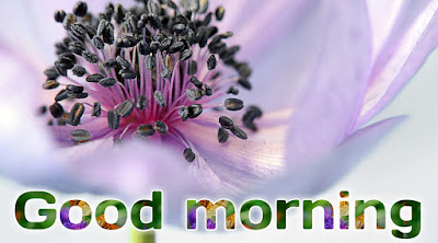 good morning flowers free download rose good morning gif