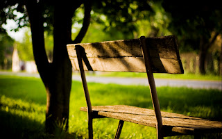 Old Bench Grass and Trees HD Wallpaper