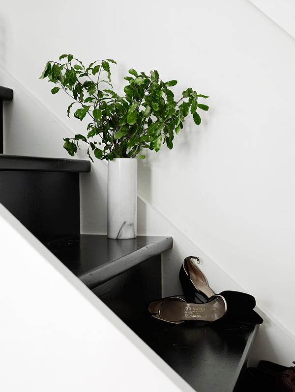 euphorbia candelabrum. Black Bedroom Furniture Sets. Home Design Ideas