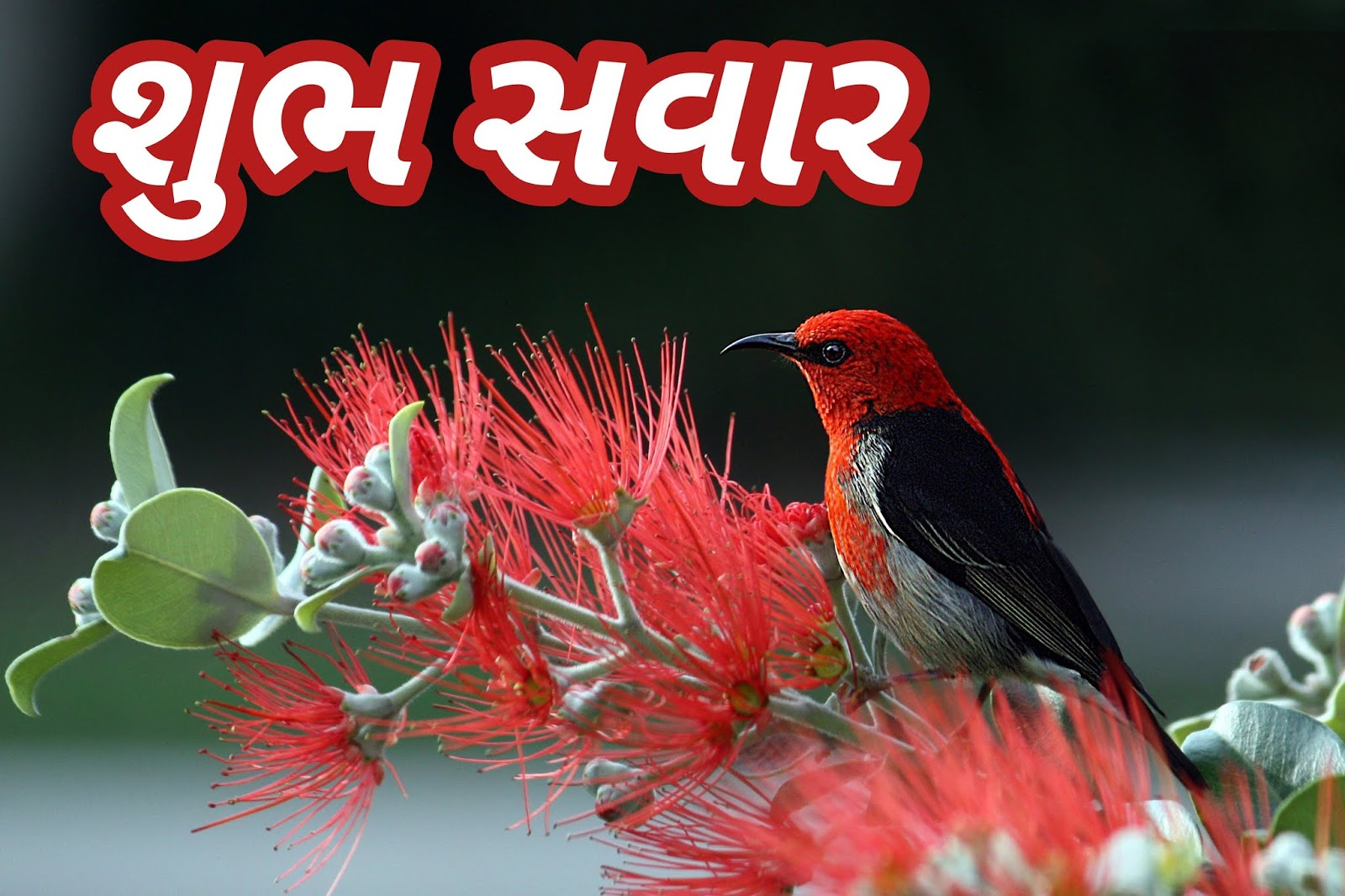 Gujarati Good morning image