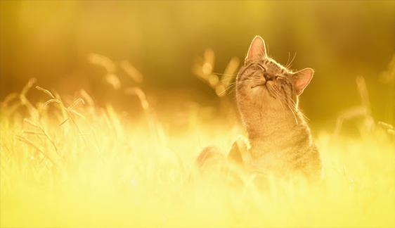 Japanese Photographer Takes Beautiful Sun-Kissed Photos Of Cats
