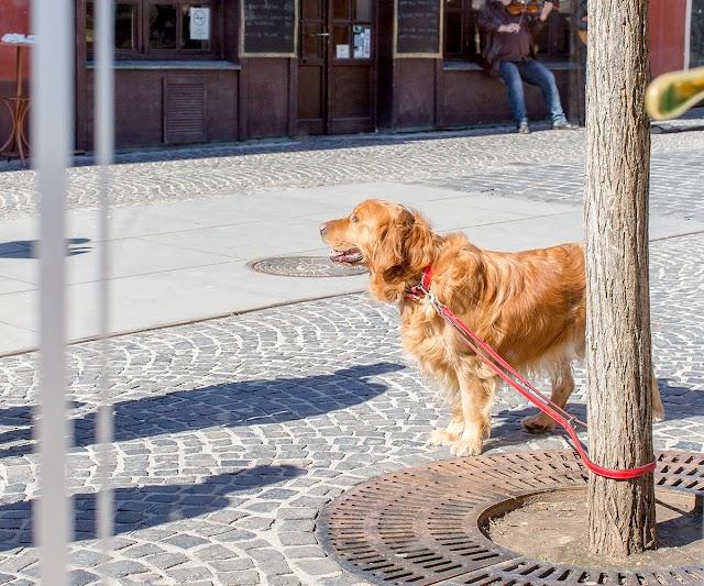 Αφήνετε τον σκύλο δεμένο έξω από το σούπερ μάρκετ; Έξι κίνδυνοι που τον απειλούν