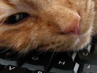 Malas Nge-blog? Bisa Jadi Inilah Penyebabnya