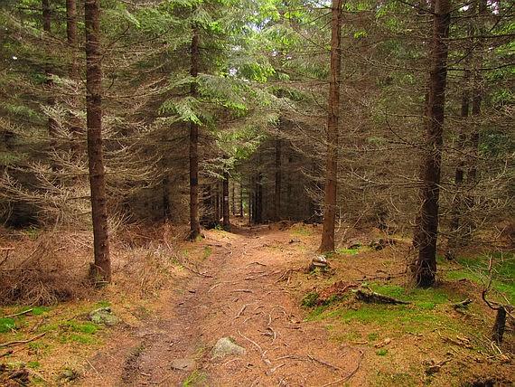 Lasy Rudaw Janowickich