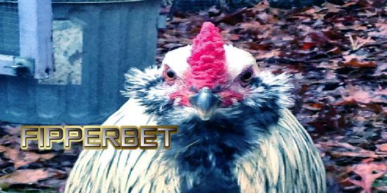 ayam laga bangkok