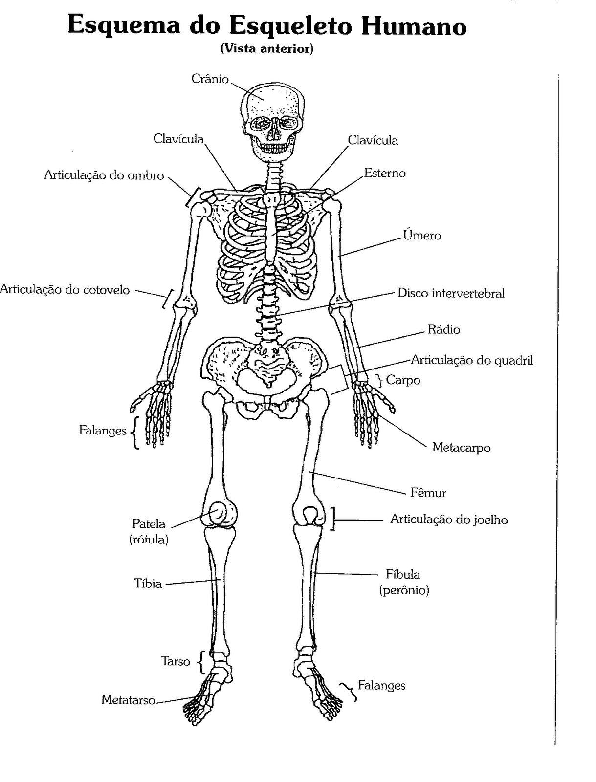 Desenhos Do Corpo Humano Por Dentro