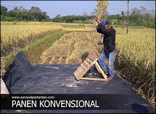 Pengertian GKP, GKS dan GKG dalam dunia Pertanian