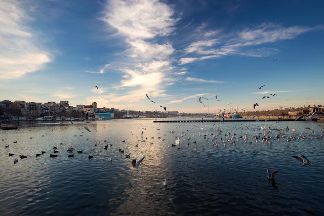 Aglomerație mare de păsări acvatice în portul Tomis