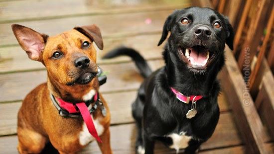 cachorros constar parte acao judicial tj