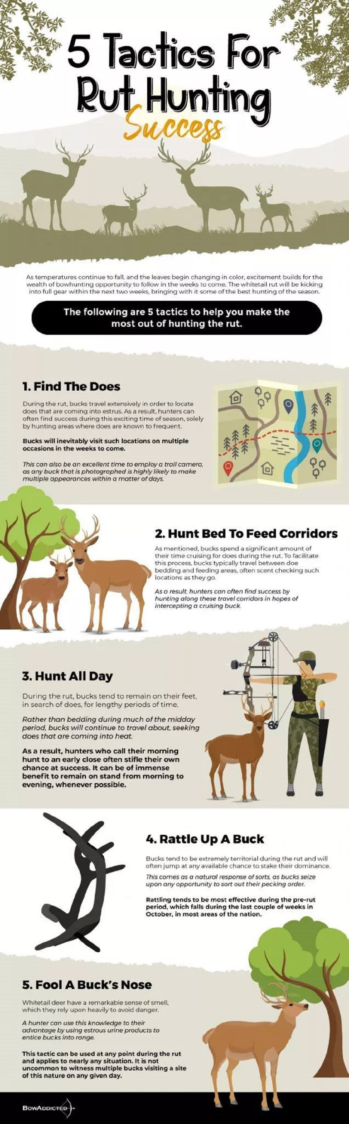 5-tactics-for-rut-hunting-success-infographic