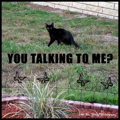 julieannbrady-blackcat-you talking to me
