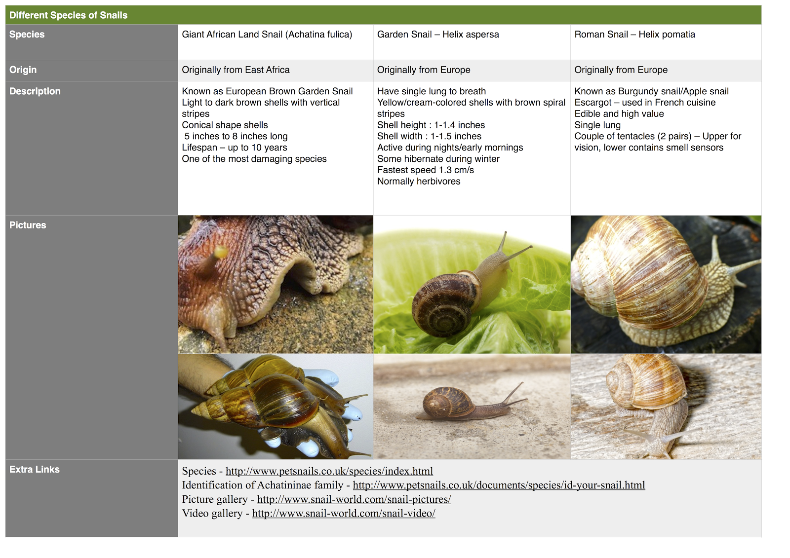 Snails Uncovered