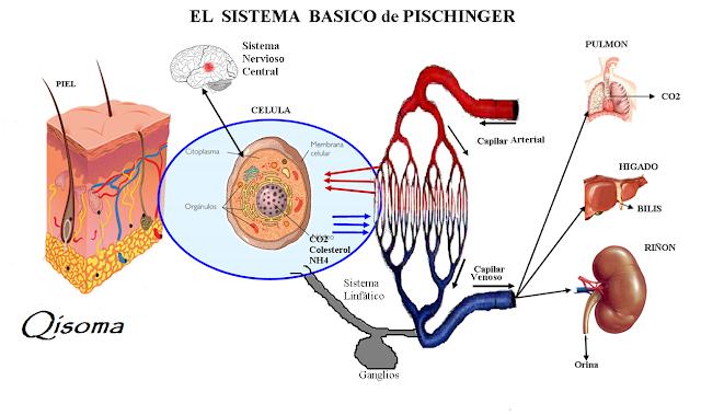 sistema Pischinger