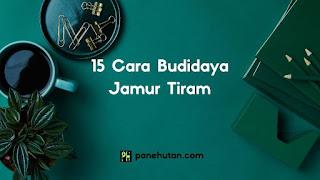15 Cara Budidaya Jamur Tiram