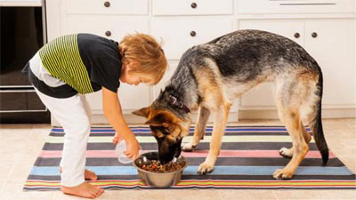 Dog feeding methods | cat and dogs
