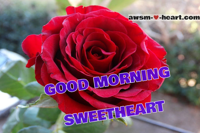 Good morning images with rose flowers hd