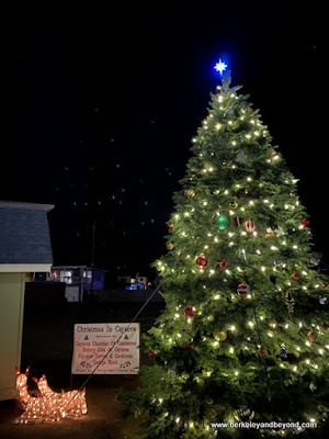 town Christmas tree in Cayucos, California