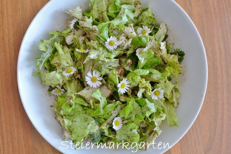 Salat-mit-Gänseblümchen-Steiermarkgarten