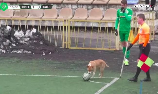 Korner atışı yapan köpek