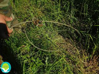 Παγίδες για σύλληψη αγριόχοιρων εντόπισε ο φορέας διαχείρησης στο Δέλτα Καλαμά
