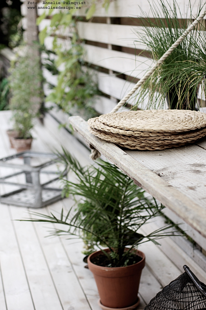 uteplats, trädäck, altam altanen, trädäcket, pergola, pergolan, trädgård, trädgården, palm, palmer,