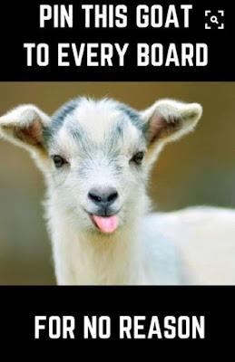 Hilarious funny memes! #memes #funny #hilarious #laugh #quotes #fun