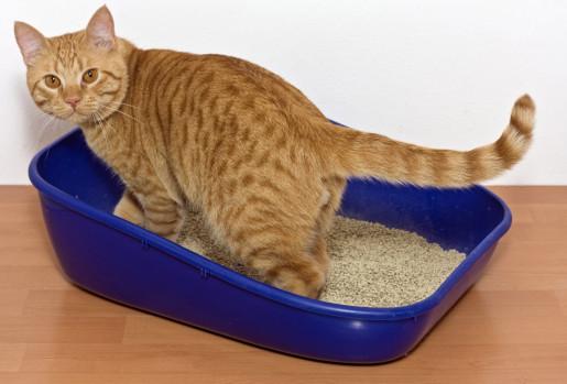 القطط تكره صندوق النفايات المتسخ