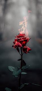 خلفيات ايفون الوردة الملتهبة